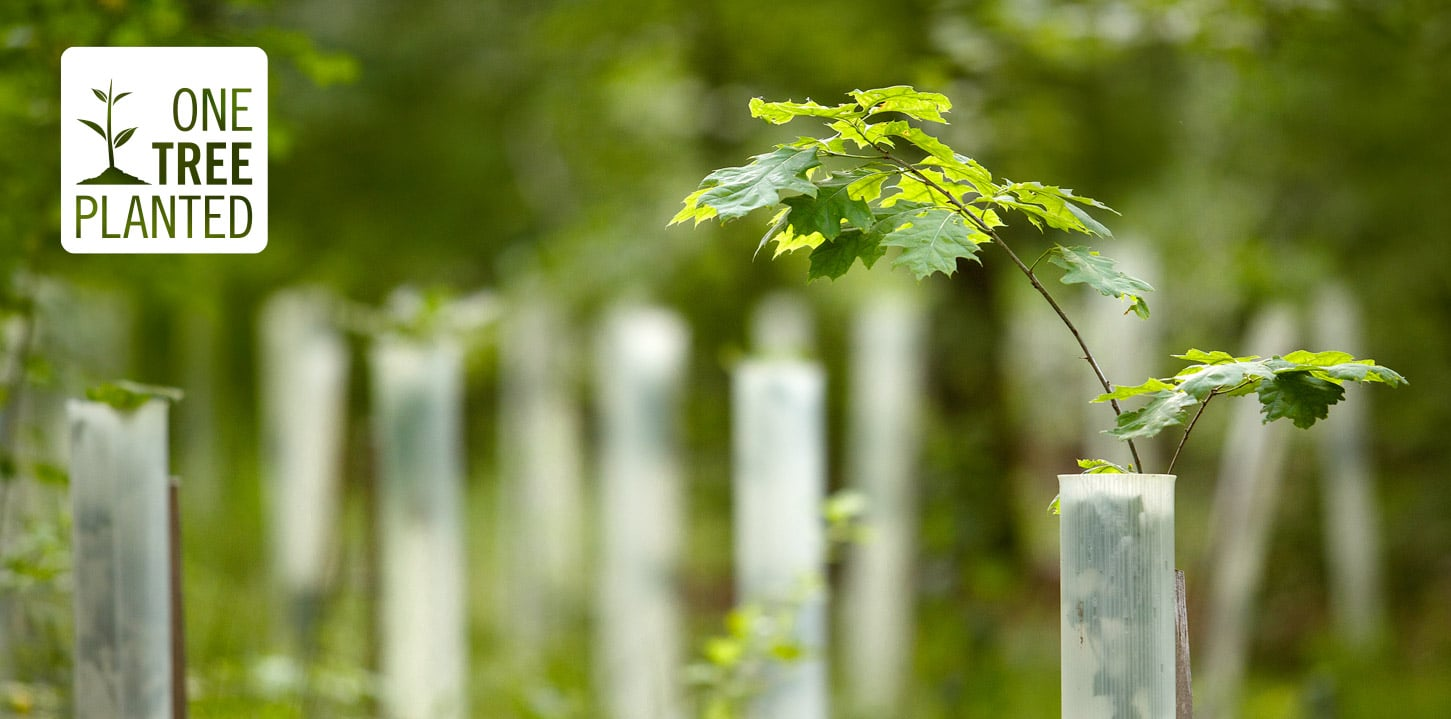 We're happy to announce we've partnered with One Tree Planted.